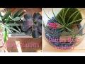 DIY HACK Succulents Pottery Barn / Pier 1 Inspired | Dollar Tree