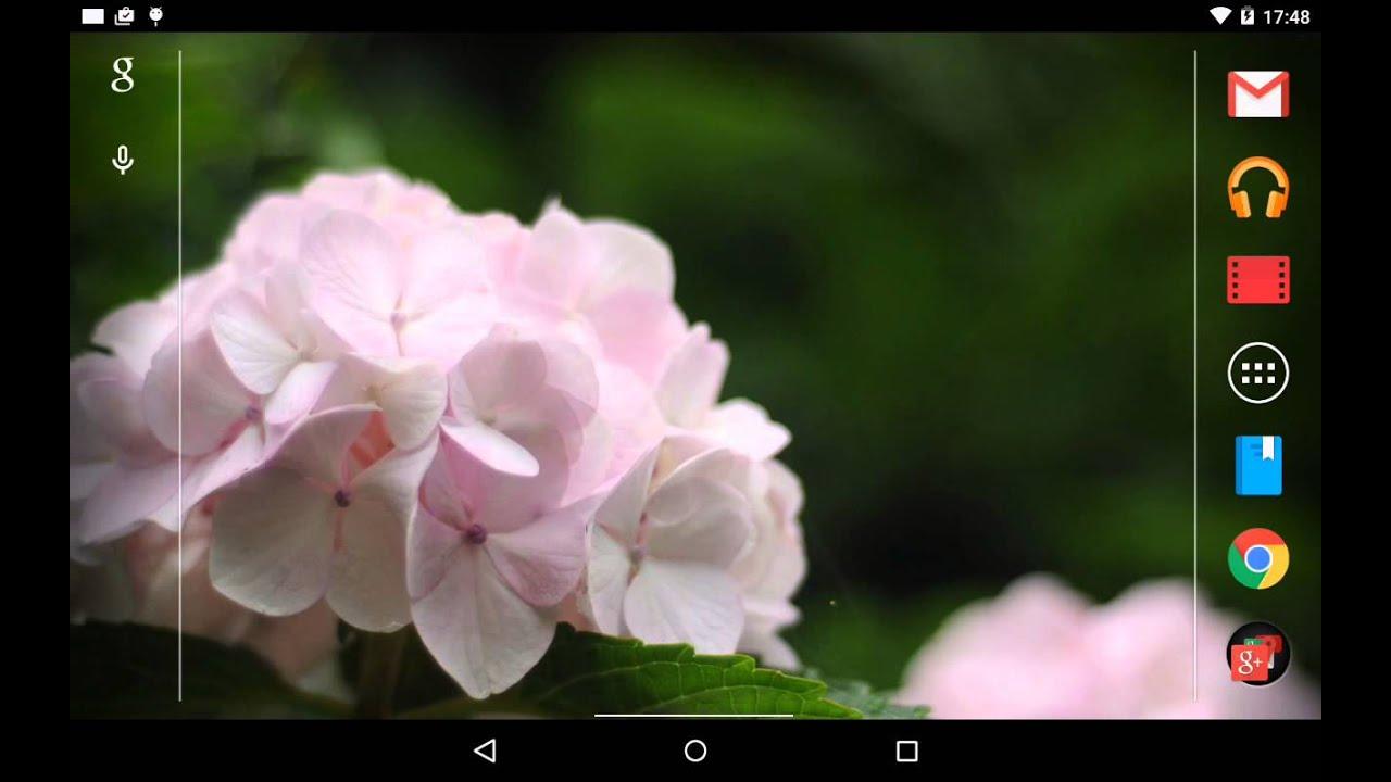 白い紫陽花の壁紙無料版free Android その2 Youtube