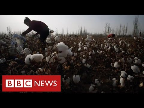 New evidence of Uighur forced labour in China's cotton industry - BBC News