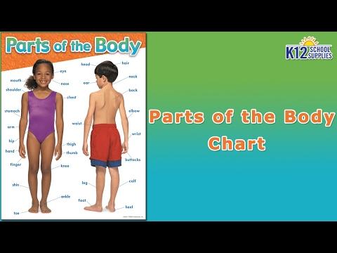 best-human-body-chart---scientific-poster--body-parts-diagram