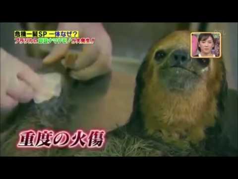 O Brasil na TV japonesa: Manaus, AM.🍃🌲🇯🇵🇧🇷