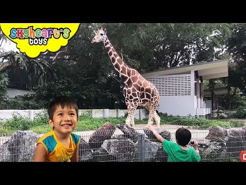 ZOO FOR KIDS Adventure in animal park | Zoo Negara Malaysia safari animals for children pets jungle