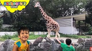 So many animals! Skyheart now sets out in Zoo Negara Kuala Lumpur t...