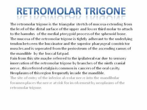 Retromolar Trigone Youtube