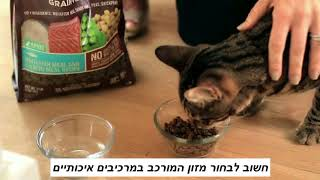מה נותנים לחתול לאכול