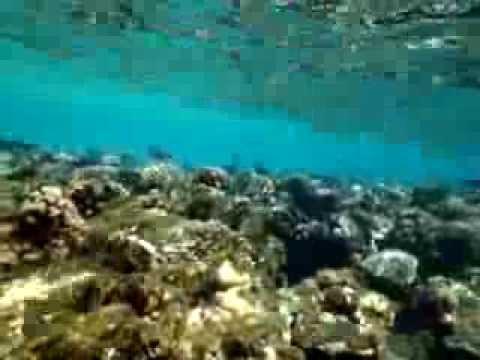 fiasco, sharm, el, sheikh, egipt, egypt, egypten, scuba, nurkowanie, diving, podwodny, underwater, tauchen, unterwasser, morze, czerwone, red, sea, rote, meer, pó�wysep, synaj, synajski, sinai, rafa, reef, nature, ryba, ryby, fish, fisch