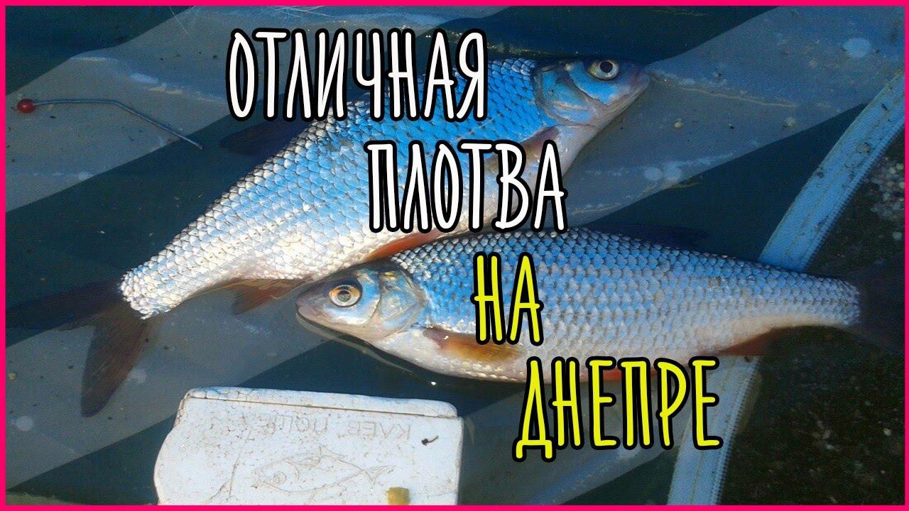 рыбалка на днепре возле солошино видео