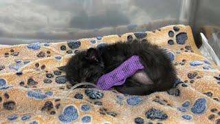 생후 3주차 아픈 아기고양이, 병원 입원 후 면회 다녀…