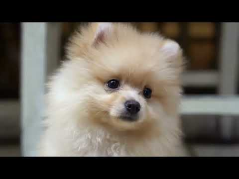 top-10-most-cutest-dog-breeds-in-the-world-2020