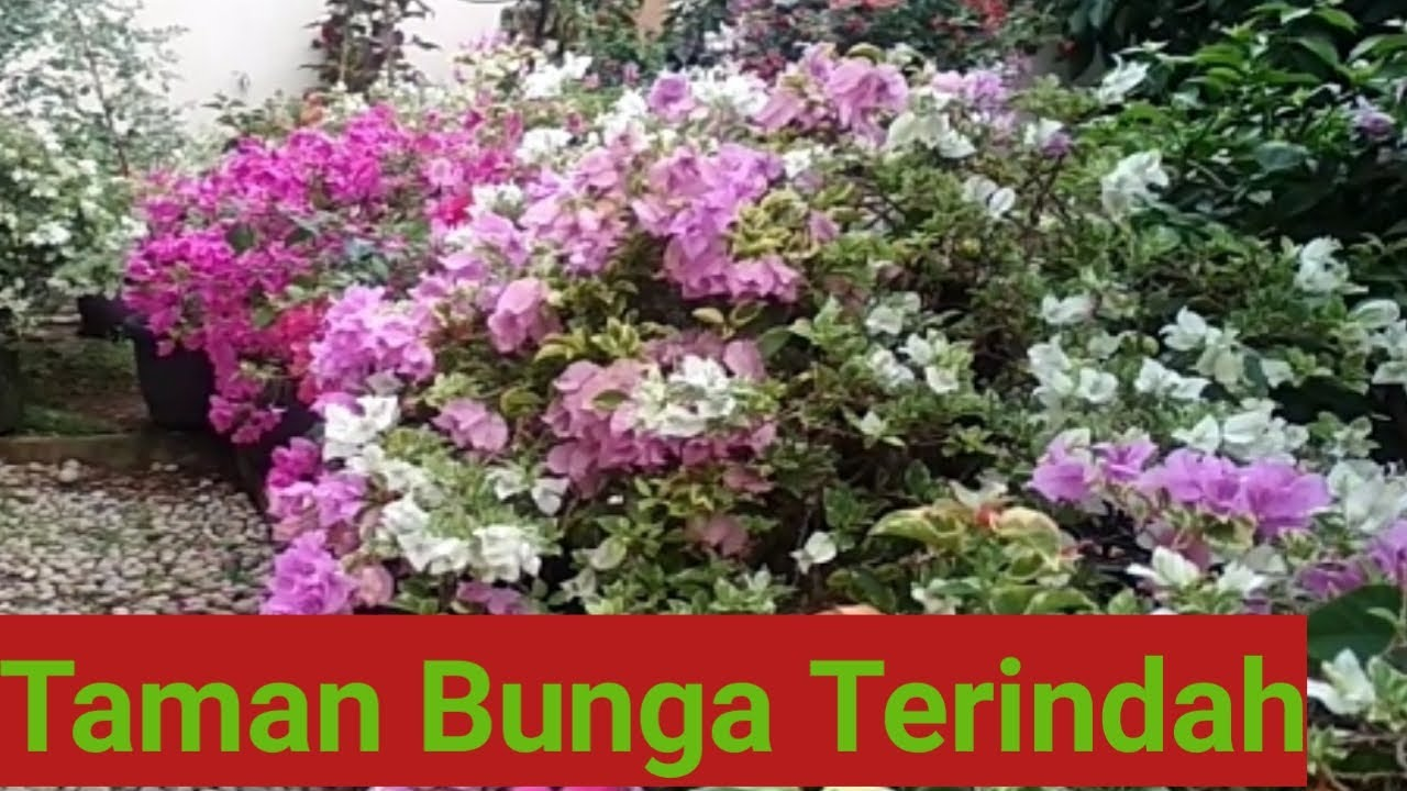 Taman Bunga Terindah Youtube