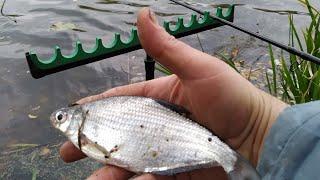 Осенняя рыбалка фидером на реке Донец, белую рыбу словить все сложнее и сложнее, но можно.