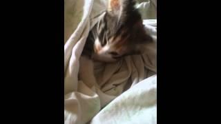 Прикол, котенок в отключке)))