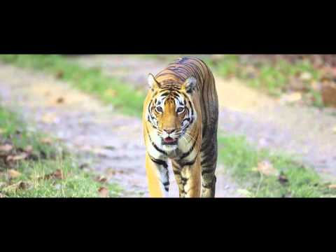 Taj Safaris - Madhya Pradesh