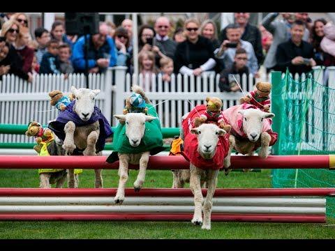 Spring Family Raceday at Ascot Racecourse