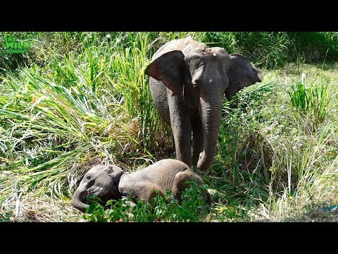 Emergency Rescue Operation To Save A Baby Elephant