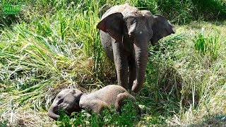 Фото Emergency Rescue Operation To Save A Baby Elephant