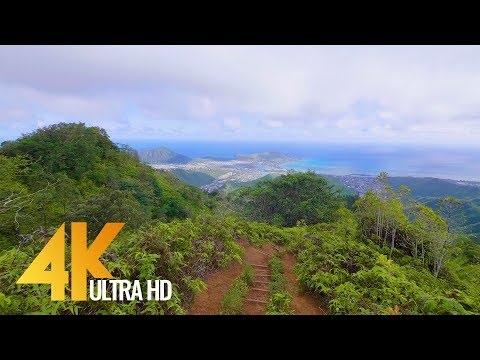 4K Virtual Walk Walking in the Forest Hawaiian Kuliouou Ridge Trail 1.5 HRS