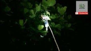 Download Video WILD HUNTER: BERBURU BURUNG EMPRIT DI MALAM HARI LANGSUNG KE SARANG NYA MP3 3GP MP4