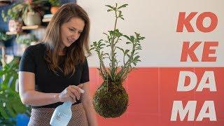 DIY – KOKEDAMA (PLANTA QUE VOA) – Como Fazer e Cuidados