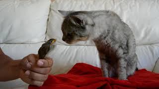 gato vs pajarito se lo quiere comer