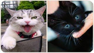 Смешное Видео с Кошками! Funny Cats Video Compilation / Прикольные Смешные Кошки /