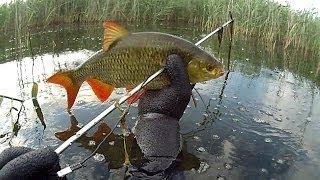 Polowanie na duże wzdręgi / Spearfishing big rudd