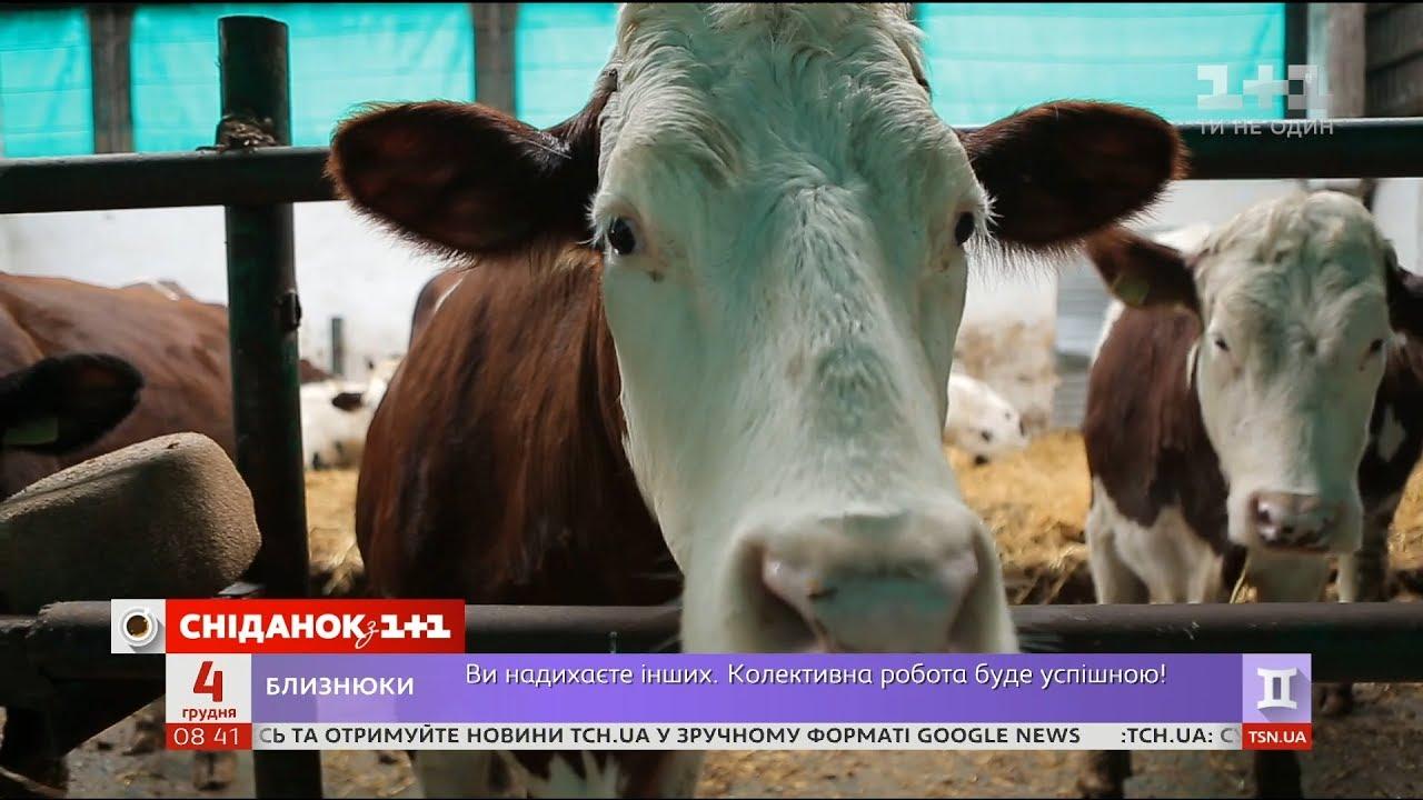 Мій путівник. Вінниччина - ферма, на якій виробляють сири та йогурти за ізраїльськими технологіями