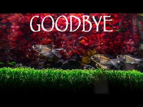 goodbye-my-colorful-nano-aquarium