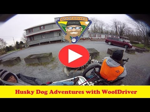 Dog Videos | WooFDriving The Conewago Recreation Trail, PA | Husky Dog Adventure