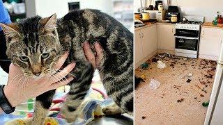 Хозяйка заперла в доме 14 кошек, которые съели друг друга из за голода… выжил лишь один!