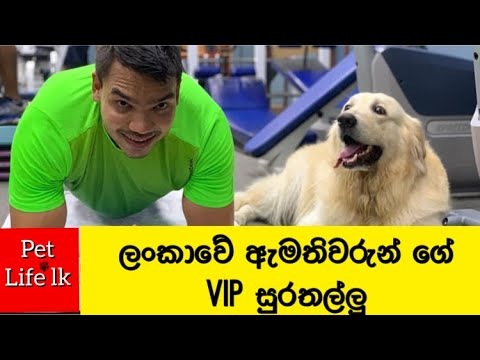 SriLankan politician's pet animals | ලංකාවේ දේශපාලකයන්ගේ  සුරතලුන් | Politician'dogs | VIP dogs