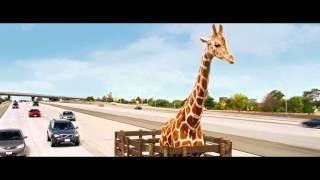 Мальчишник: Часть III. Жираф