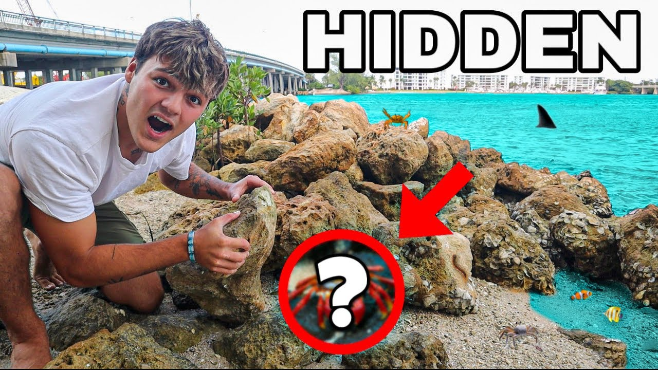 FLIPPING ROCKS to FIND HIDDEN CREATURES for SALTWATER AQUARIUM!! *crazy*
