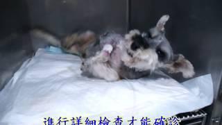 狗狗癲癇發作by英國皇家 動物醫院