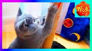 Когти кота Стрижка когтей Когтеточка Смешные животные🐱🐈