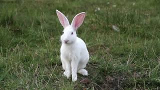 Laser Moose and Rabbit Boy: Disco Fever teaser trailer