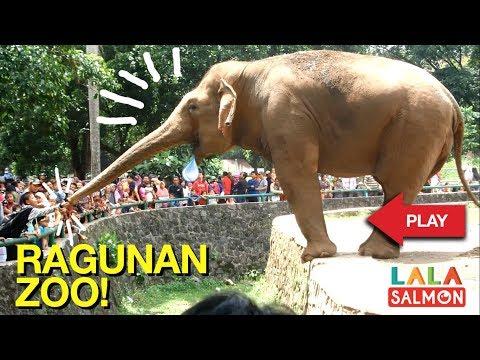Kebun Binatang Ragunan - Jakarta Zoo