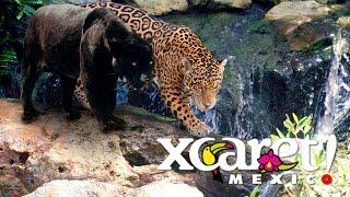 Мексиканский ЭкоПарк ШКАРЕТ - Xcaret park Mexico(Мексиканский ЭкоПарк ШКАРЕТ - Xcaret park Mexico Парк Шкарет ( Xcaret park ) является тем местом Мексики, где в определенн..., 2016-05-08T18:26:13.000Z)