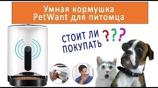 Обзор умной кормушки PetWant