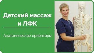 Детский массаж и ЛФК  Анатомические ориентиры