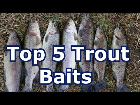 Best 5 Baits For Trout