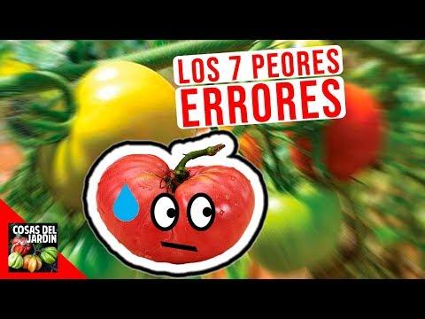 Errores más comunes del cultivo de tomate en maceta - 1