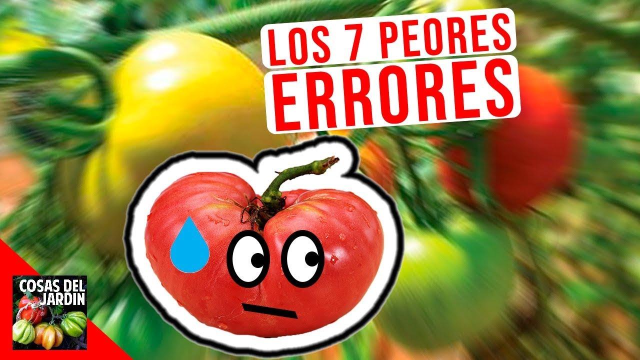 Errores Más Comunes Del Cultivo De Tomate En Maceta Cosas