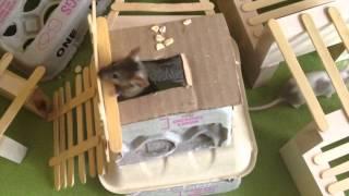 A Few Things Pet Mice Enjoy