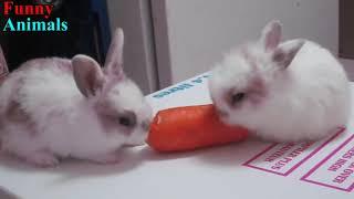 Funny Baby Bunny Rabbit Videos Compilation   Cute Rabbits720p