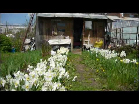 Сад-огород. Цветы весенние