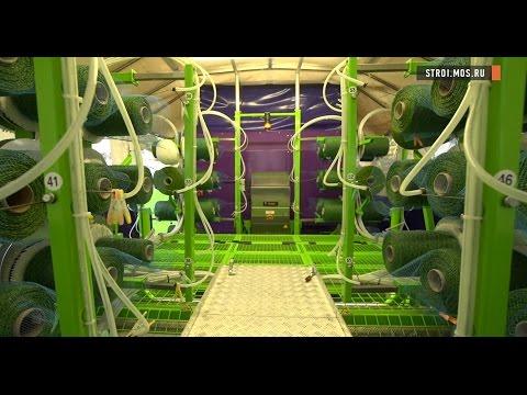 Стадион «Лужники» прошивка газона по технологии SISGRASS