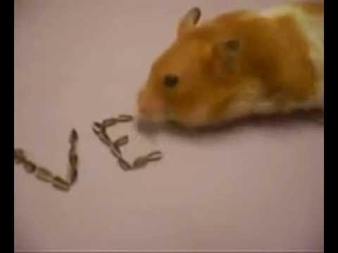 Con chuột xếp chữ i love you - Đang cập nhật - Clip giải trí_ hài kịch.flv