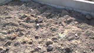 Rellenado del terreno en San Cayetano