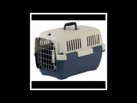 How to - transport a guinea pig